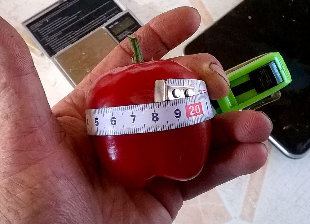 16_09_10_megarocoto-frucht2