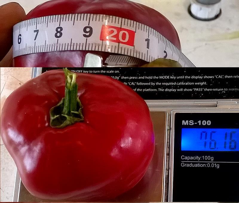 16_09_16_megarocoto-frucht1