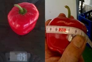 16_09_29_megarocoto_frucht
